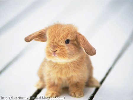 Sweet small bunny