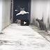 Cat dodges other cats