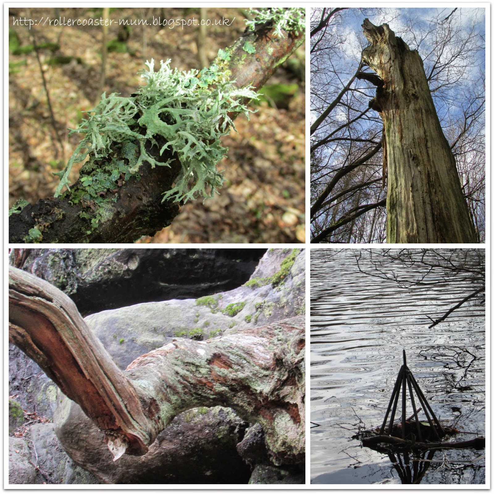 art in nature, Woodland Trust