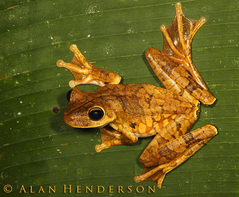 Minibeast Wildlife Rainforest Encounters Costa Rica