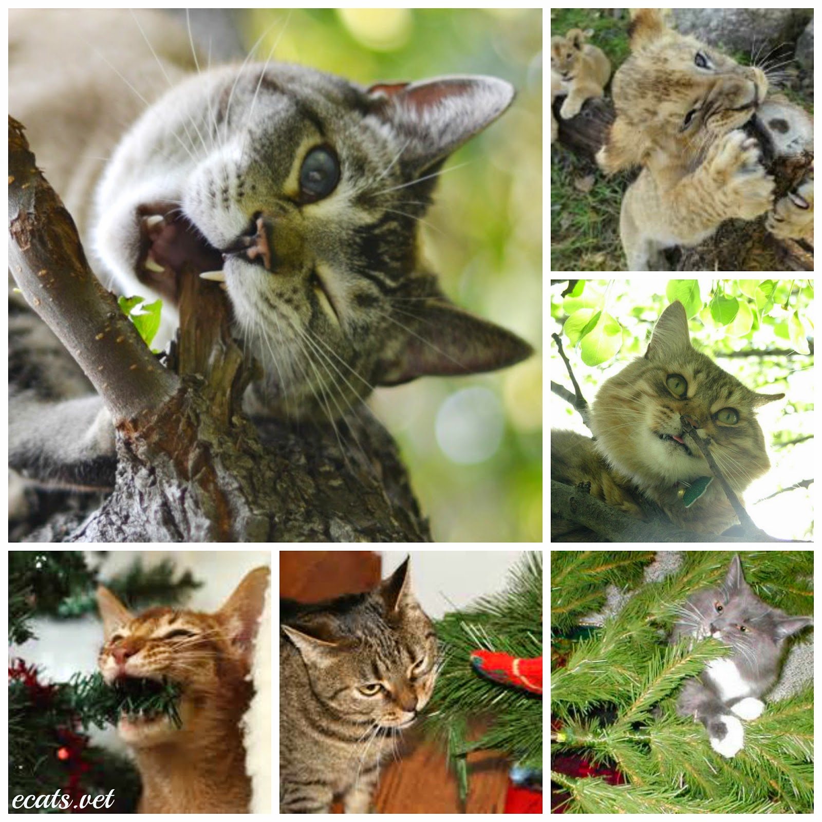 Keep Cat Away From Christmas Tree: Exclusively Cats Veterinary Hospital Blog: How Do I Keep