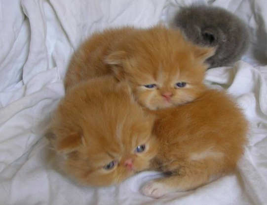 Perawatan Umum Anak Kucing Newsinformasi