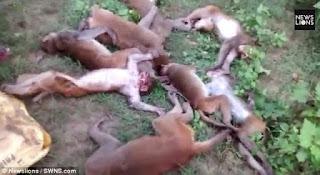 12 Monyet mati mendadak bersamaan, setelah diteliti penyebab kematian nya bikin Garuk garuk Kepala