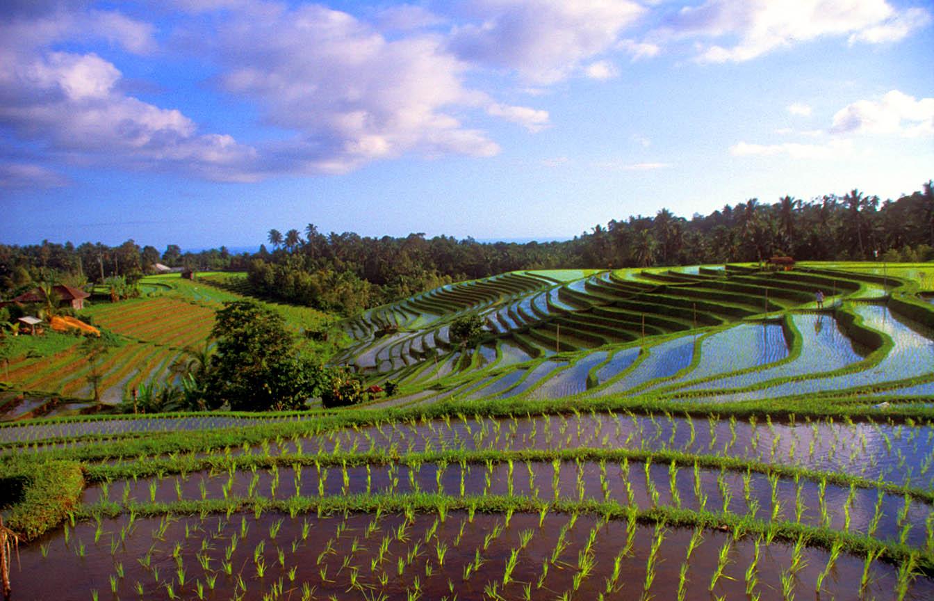 Bali Island - dailyoffbeatnews