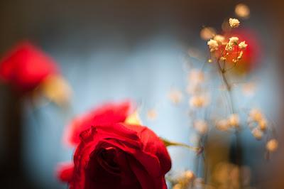 Hình ảnh đẹp hoa hồng