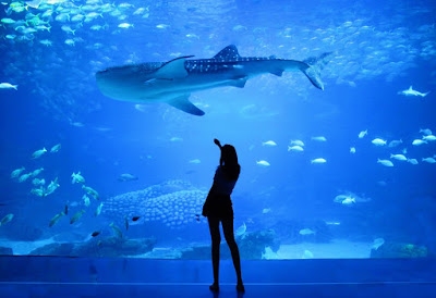 Lady posing at aquarium