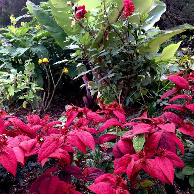 tropical%2Bgardens_peter%2Bnixon.jpg