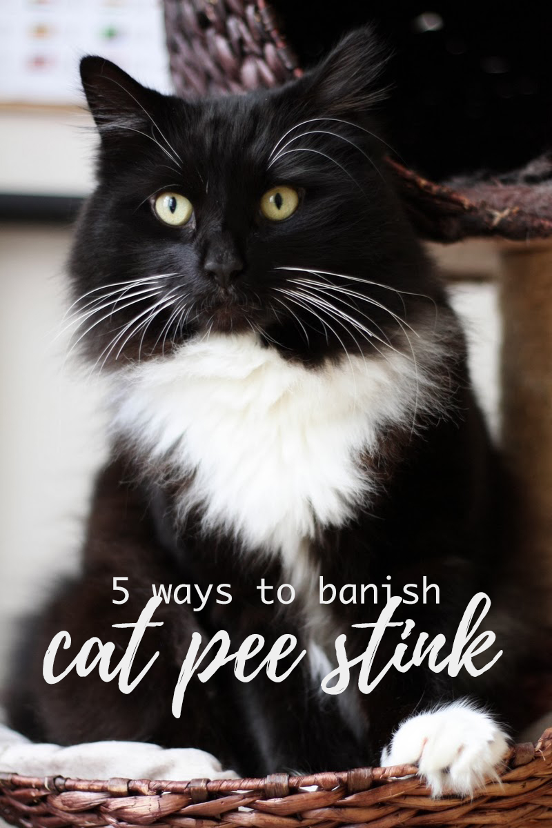 5 ways how to banish cat pee stink