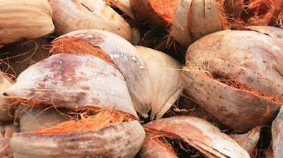 Sabut kelapa sebagai pewarna alami batik