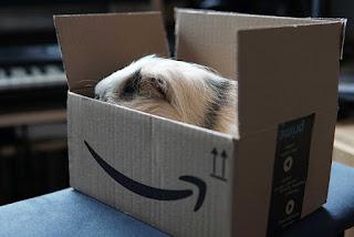 Apa nama jasa pengiriman hewan?