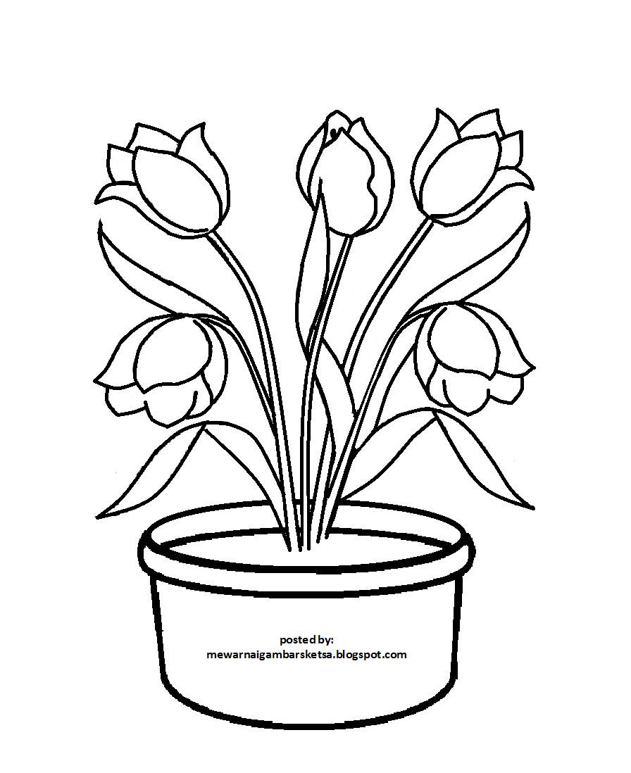 Gambar Mewarnai Bunga Melati