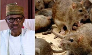 Rats Takes over Buhari's Office