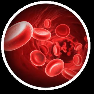 krwinki czerwone we krwi