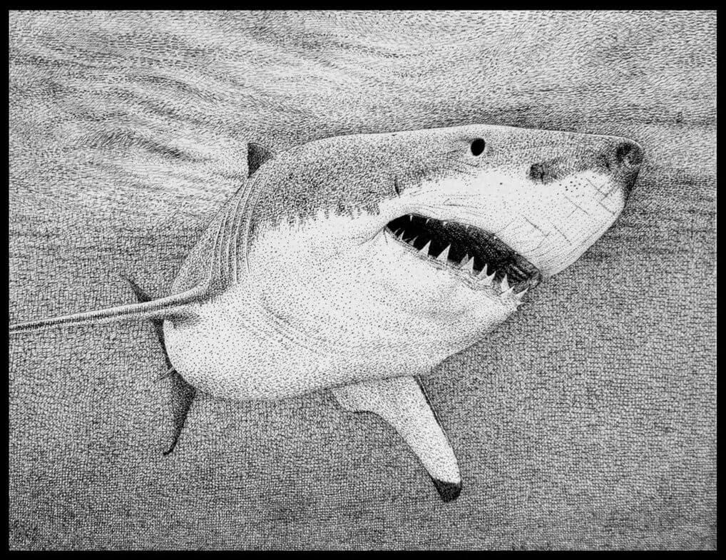 08-Shark-Rens-Ink-Animal-Wildlife-Pen-and-Ink-Stippling-Drawings