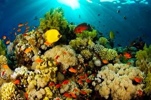 краткий обзор необычных обитателей морских глубин