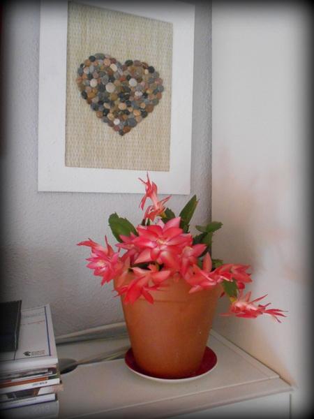flor de maio rosa