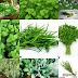 THESE HEALTHY HERBS ARE A MUST HAVE AT HOME