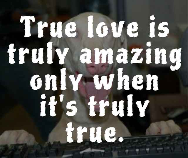 funny quotes about falling in love