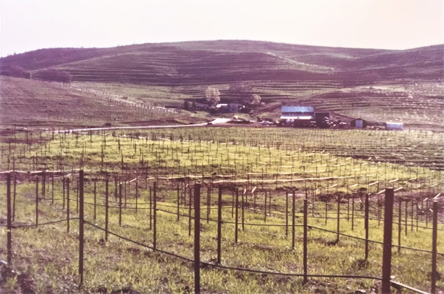 Robert Earl Burton's Fellowship of Friends cult Renaissance Vineyard May 1979 Oregon House