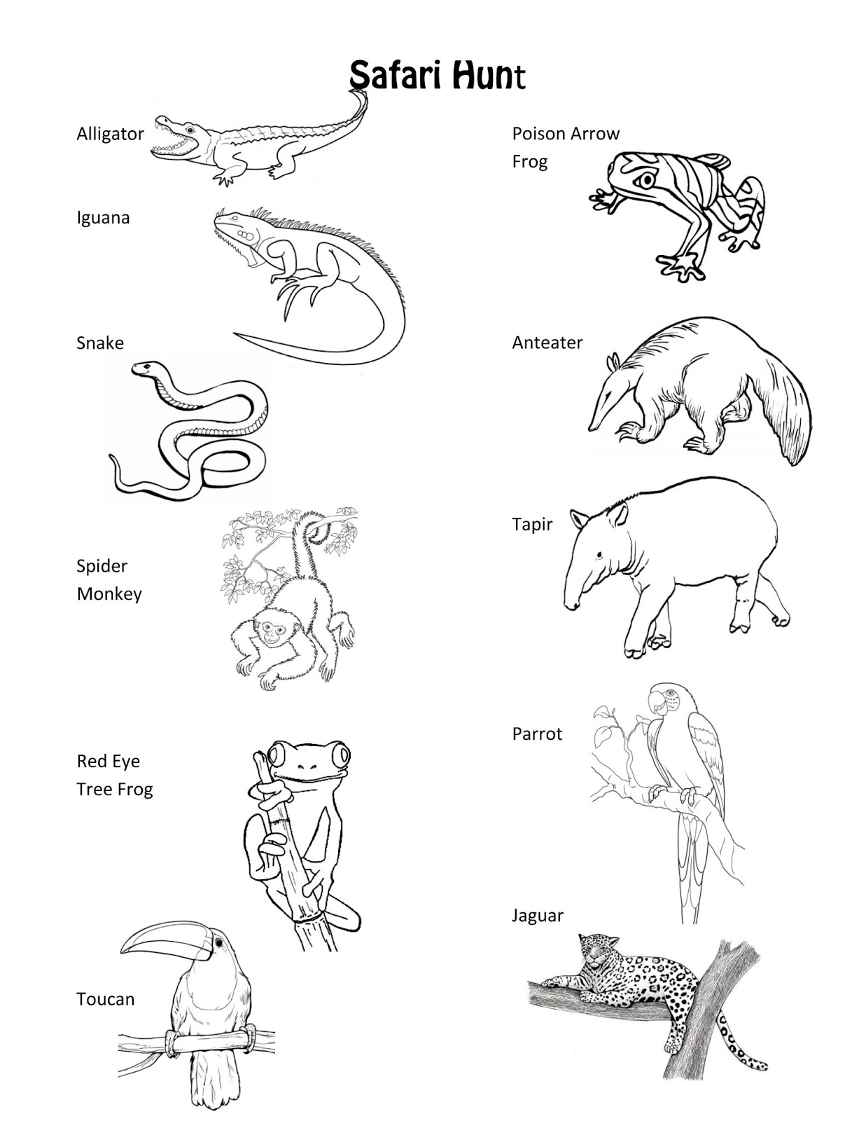 Animal Tracks Coloring Pages