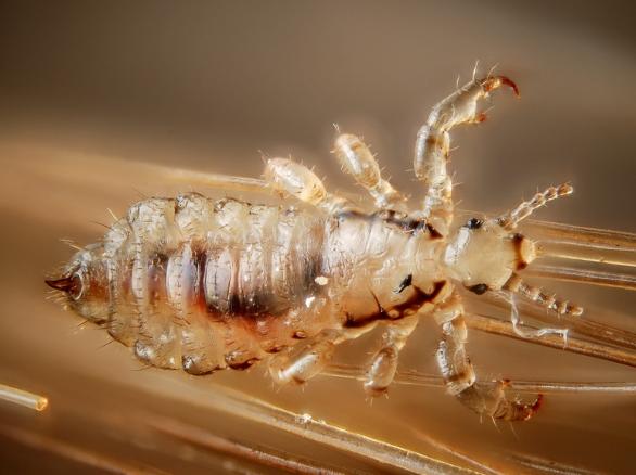 Pengertian dan Contoh Simbiosis Parasitisme