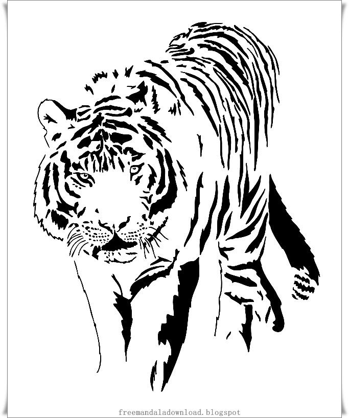 white tiger tattoos - 637×800