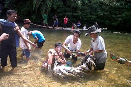 Mencokau Ikan Lubuk Larangan, Tradisi Turun Temurun Masyarakat Kampar