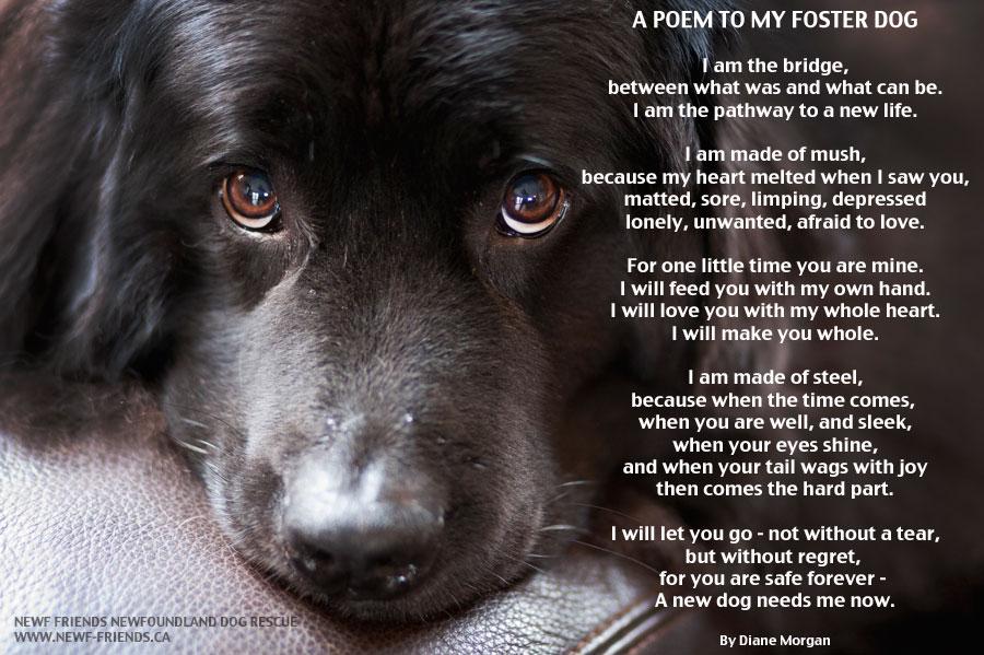Poem On Pet Dog