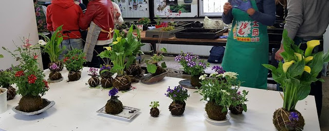 bonsai center sopelana talleres y cursos