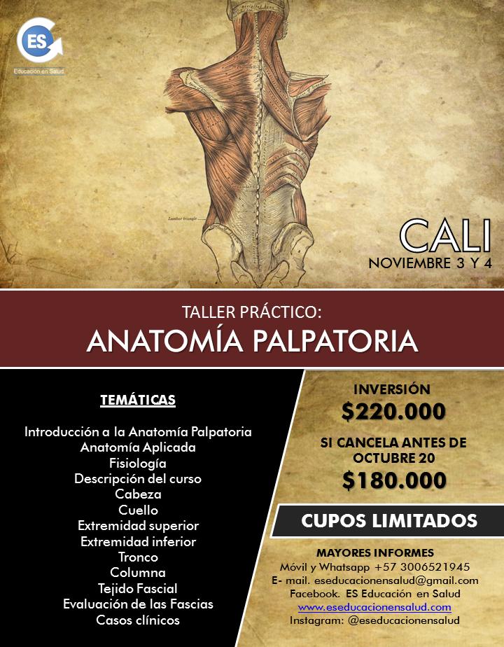 TALLER PRÁCTICO DE ANATOMÍA PALPATORIA