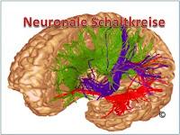 """Wie lernt unser Gehirn wichtig von unwichtig zu unterschieden"""""""