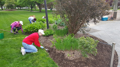 Franklin Garden Club members were working on the flower beds  last week in prep for the mulch to be laid out today