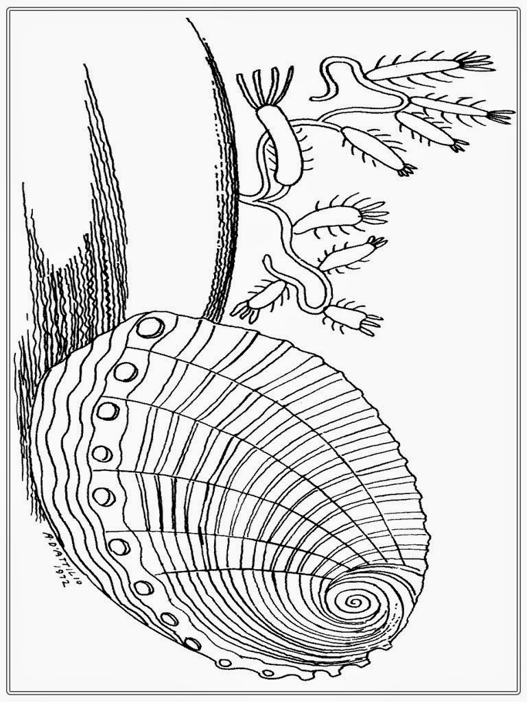 Free coloring pages of clam shell for Clam coloring page