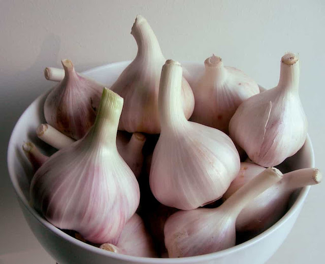 garlic img
