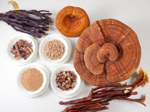 công dụng chữa bệnh của nấm linh chi