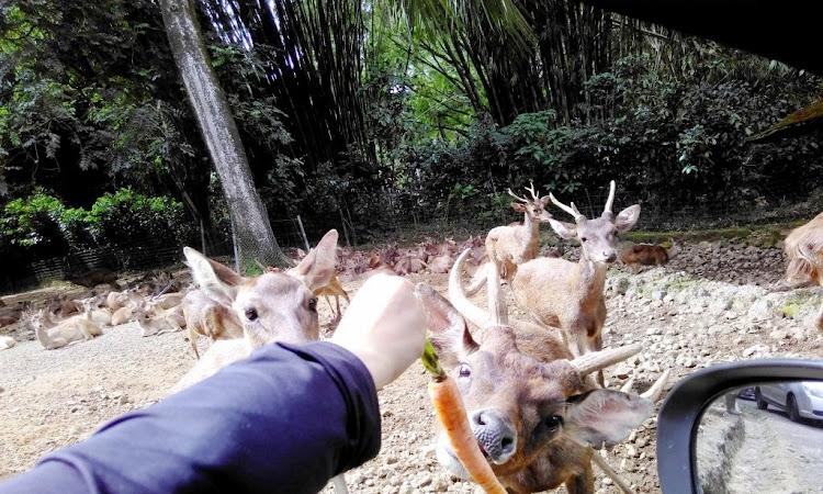 Taman Safari, Destinasi wisata kebun binatang di Bogor