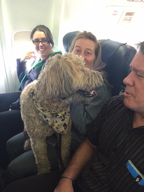 Airlines Break Their Own Rules So Pets Can Escape Fires - So it's wonderful that they can take their beloved animals with them