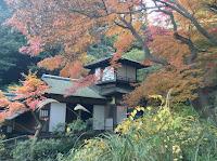 Sankeien Garden autumn