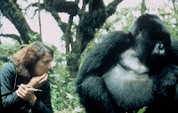 Dian Fossey with her favorite gorilla, Digit