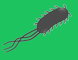 Ilustrasi bakteri Escherichia Coli yang ada di dalam usus besar vertebrata dan manusia