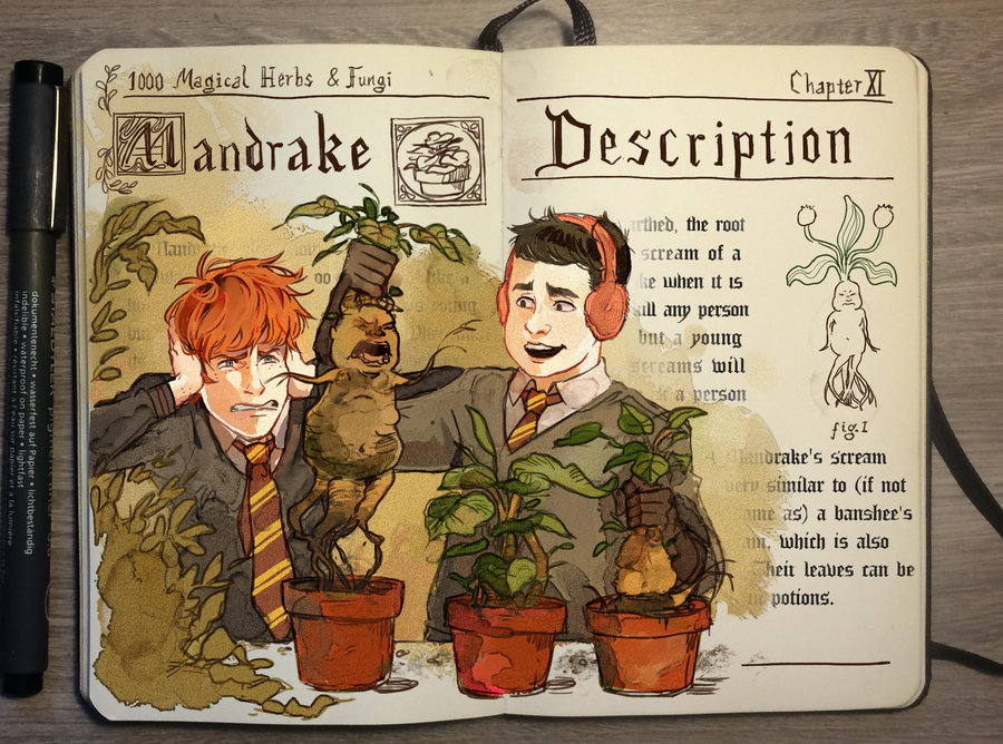 01-Mandrake-Gabriel-Picolo-kun-Harry-Potter-Moleskine-Drawings-of-Wizard-Spells-www-designstack-co