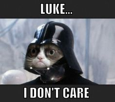 Grumpy Cat Memes 4