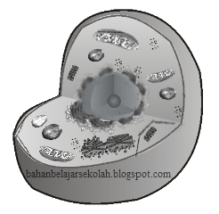 Sitoplasma merupakan bab sel yang mencakup semua materi yang berada di antara membran sel STRUKTUR, SIFAT, DAN FUNGSI SITOPLASMA