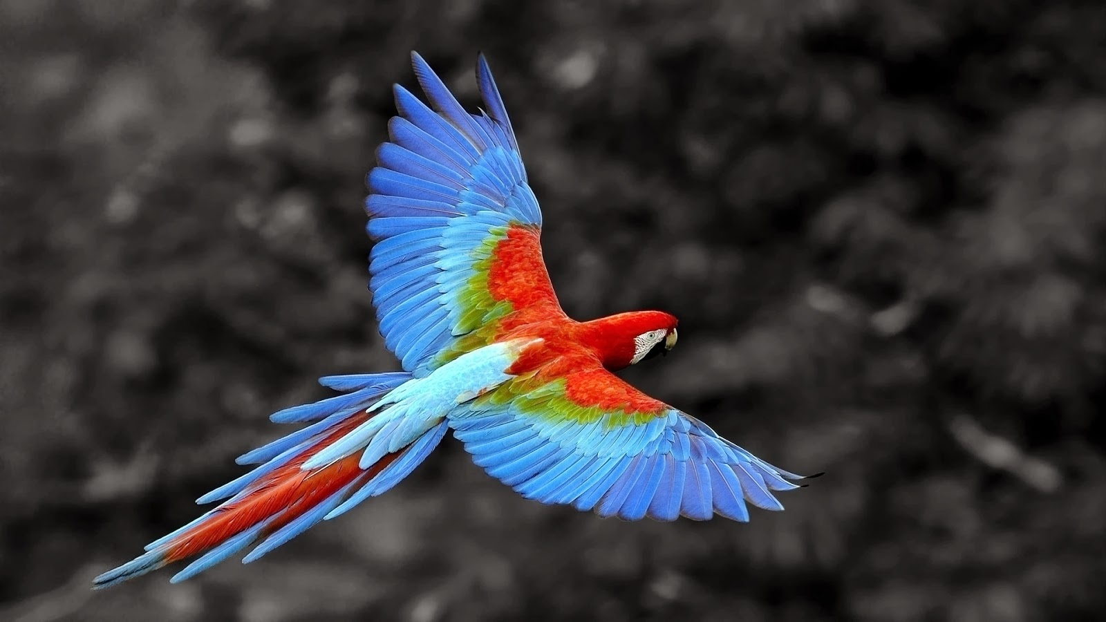 Cute Cute Hd Wallpapers Best Pics Store Parrot Hd Wallpapers