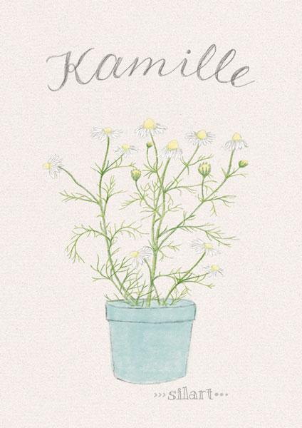 Kamille im Topf, Zeichnung, Illustration