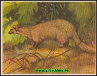 www.yakachiner.be