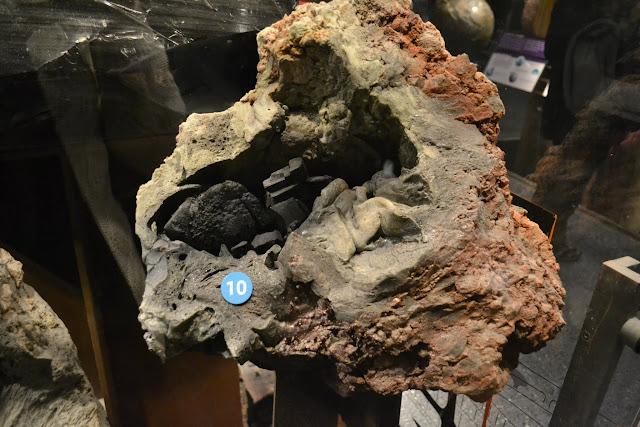 Американський музей природознавства, Нью-Йорк(American Museum of Natural History, NYC). Камінь - залишки каліфорнійського лісу