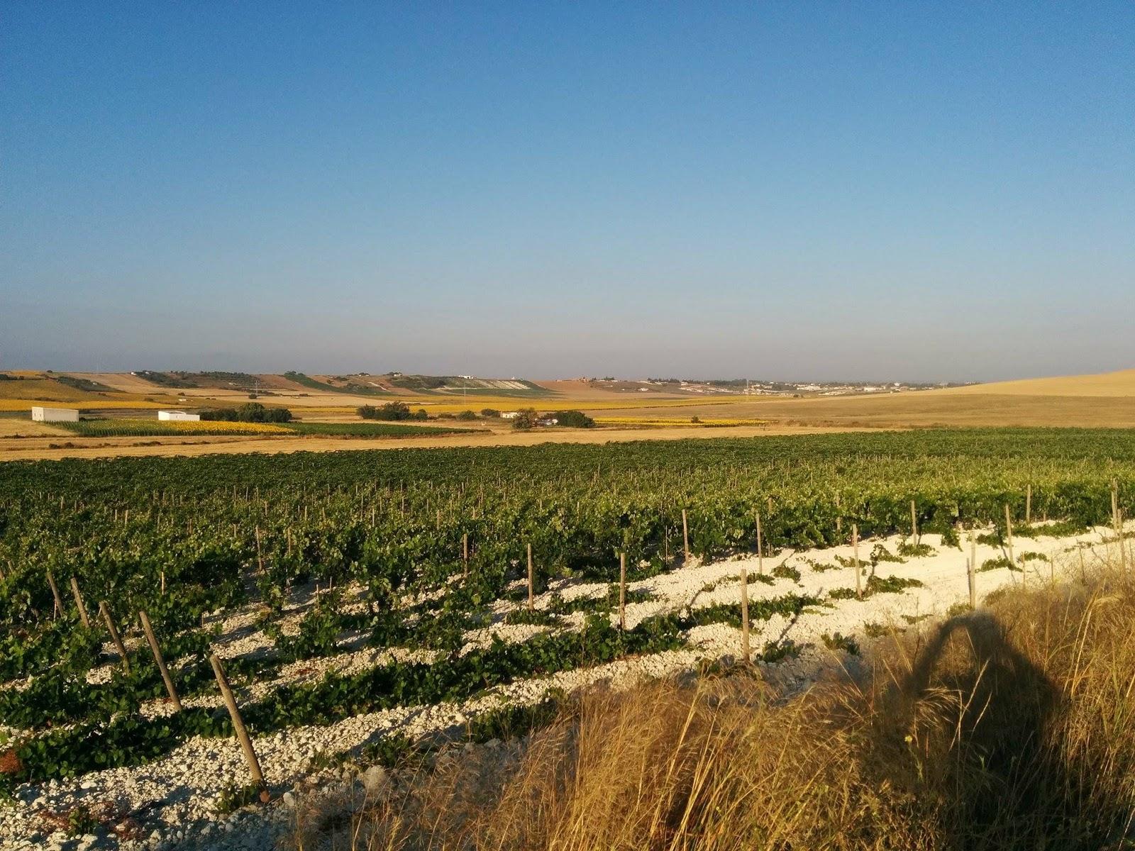 Matalián, el pago del vino Socaire