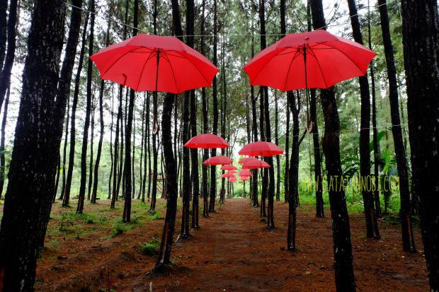 Harga Tiket Masuk Dan Lokasi Hutan Pinus Kragilan Spot Wisata Top