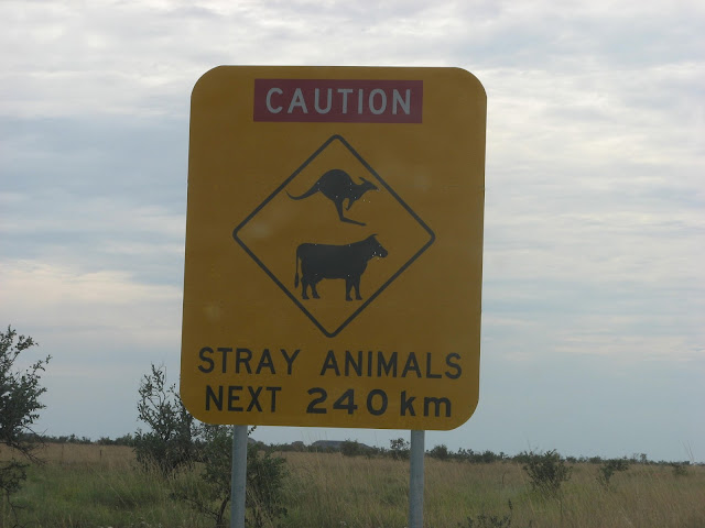 sign saying to beware of stray animals on road for next 240 km
